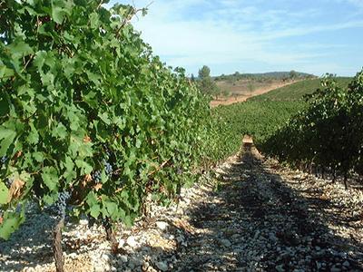 Découvrez nos gammes de vins