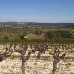 Vignes-piège-à-syrphe